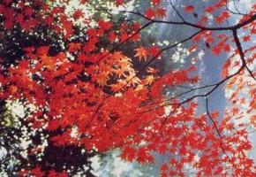『嵯峨野・四季のうつろい』岡田克敏写真集